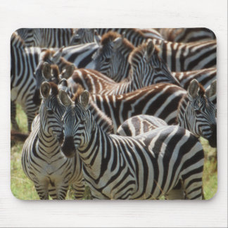 Large herd of Burchell's Zebra Mouse Pad
