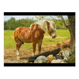 Large Horse Near Stone Wall In Spring Farm Field Postcard