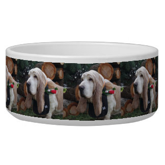 large pet bowl Basset hound