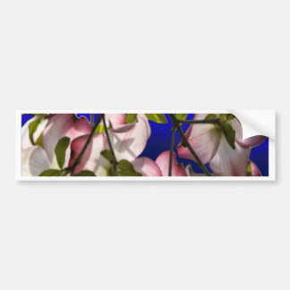 Large Pink Dogwood Flowers - Blue Bumper Sticker