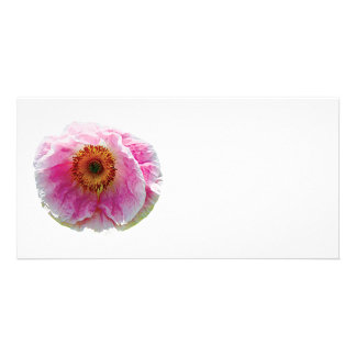 Large Pink Poppy Photo Card Template