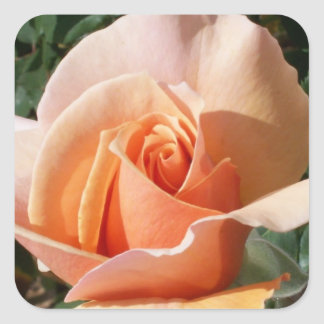 Large pink rose square sticker