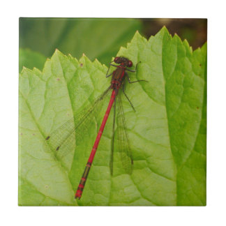 Large Red Damselfly Tile