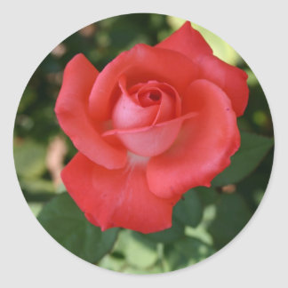 Large red orange rose flower blossom sticker