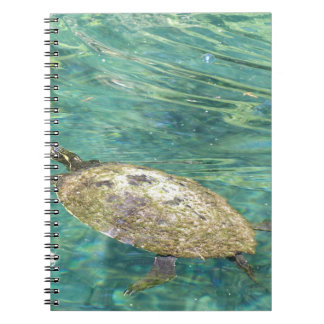 large river turtle swimming notebook