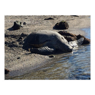 Large Sea Turtle on Beach Poster