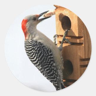 Large Sticker - Woodpecker