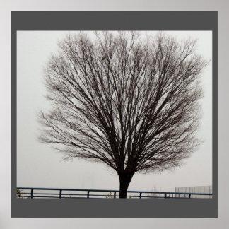 Large Tree Photo Poster