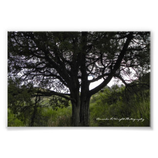 Large Tree Print
