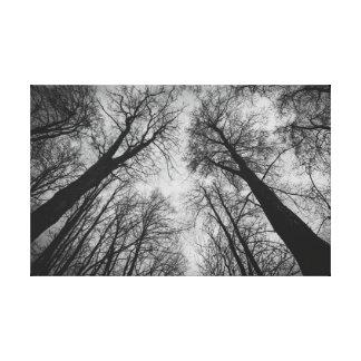 Large trees canvas print