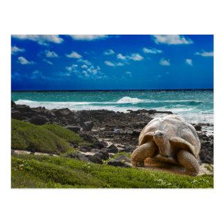 Large turtle at the sea edge postcard