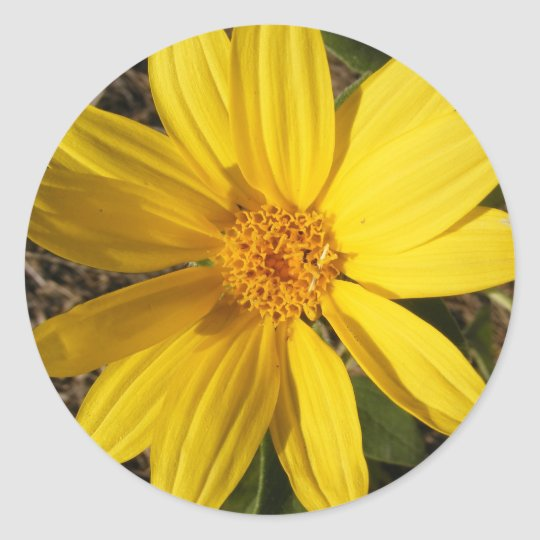 Large Wild Sunflower Sticker