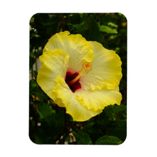 Large Yellow Hibiscus Flower Magnet