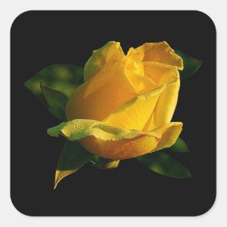 Large Yellow Rose Square Sticker