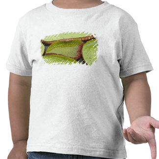 Largest lily, the Giant Amazon Water Lily Tee Shirt