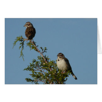 Lark Sparrow Card