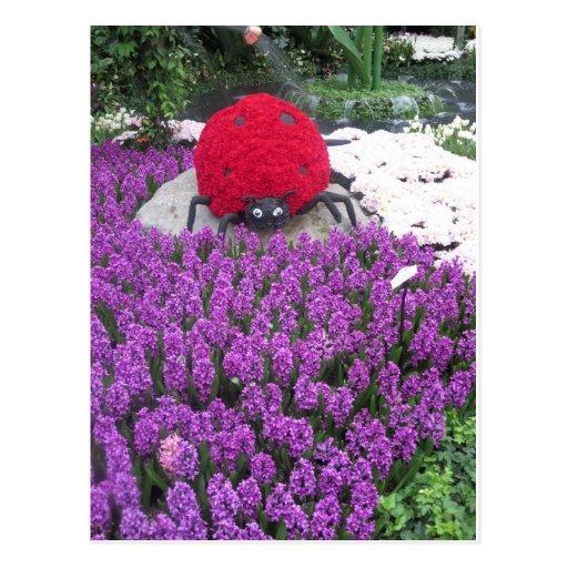 Las Vegas Butterfly Garden Flower Ladybug UNIQUE G Post Cards