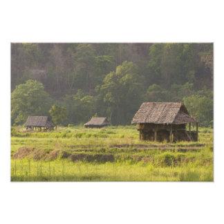 L'Asie, Thaïlande, Mae Hong Son, huttes de riz dan Photographies D'art
