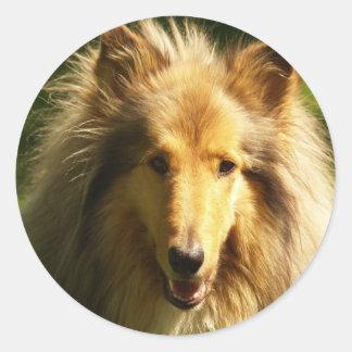 Lassie Collie Sticker