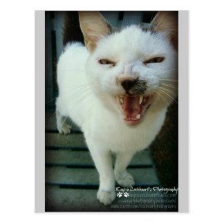 Last Hopes Chatty Catty Postcard