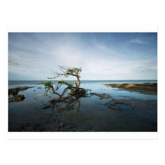 Last Mangrove Standing Postcard
