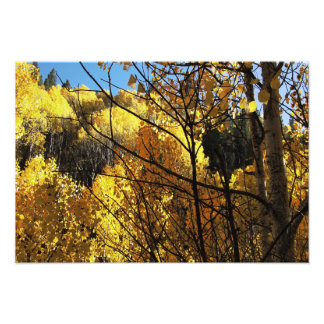 Late Afternoon in the Autumn Aspens Photo Print