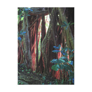 Late Afternoon Light on Fig Tree Roots Canvas Print