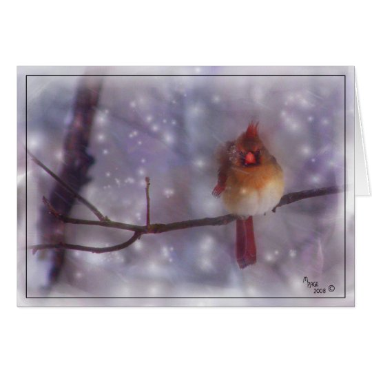 Late Cold Day Lady Cardinal Card