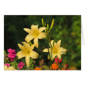 Late Summer Fling - Daylilies Card