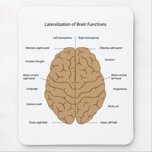 Lateralization of brain function