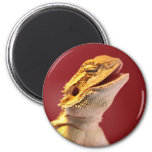 Laughing Bearded Dragon Fridge Magnets