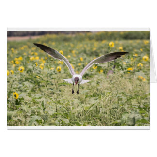 Laughing Gull Card