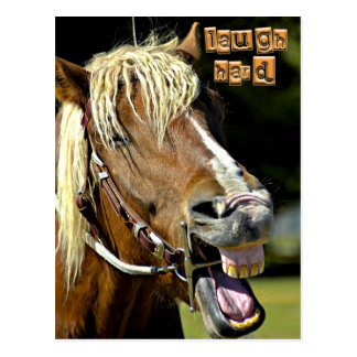 Laughing Horse Post Card
