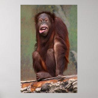 Laughing Orangutan Poster