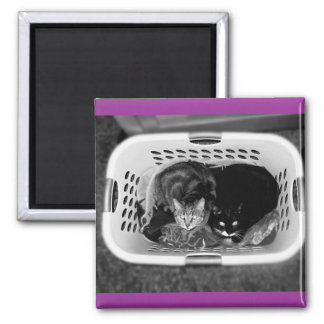 Laundry Basket Kitties Square Magnet