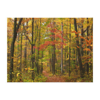Laurel Hill Trail in Fall Canvas Print
