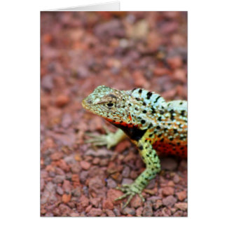 Lava Lizard Card