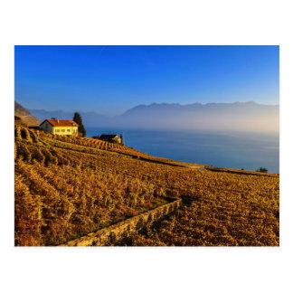 Lavaux region, Vaud, Switzerland Postcard