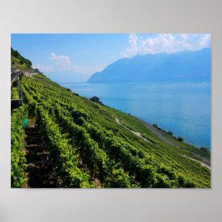 Lavaux Vineyard Terraces Poster