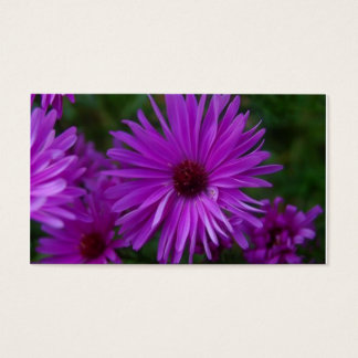 Lavendar Aster Business Card