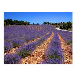 Lavendar field in Provence Postcard