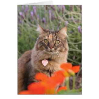 Lavendar, Nasturtium,  and a Tortoiseshell Cat Card