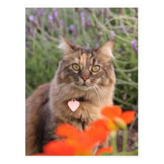 Lavendar, Nasturtium,  and a Tortoiseshell Cat Postcard