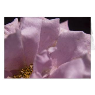 Lavendar Rose Petals Card