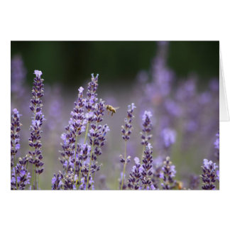 Lavender and the Bee Card