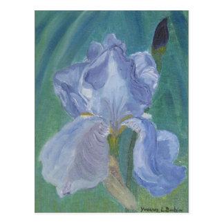 Lavender Bearded Iris Postcard