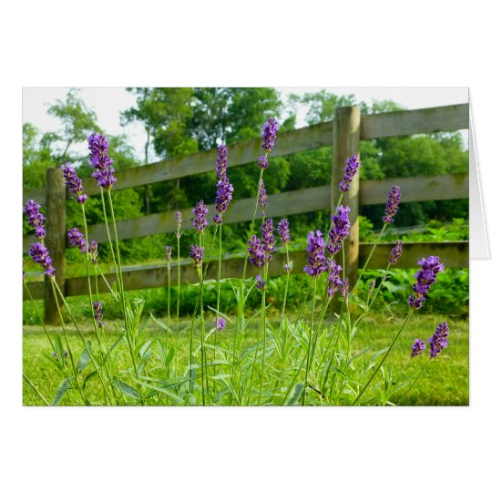 Lavender Blooming Card