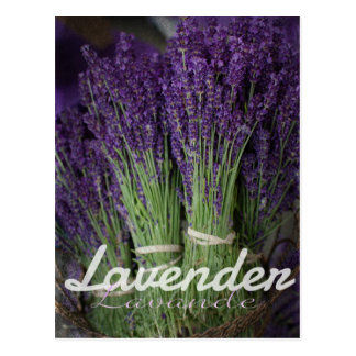 Lavender Bunch Postcard
