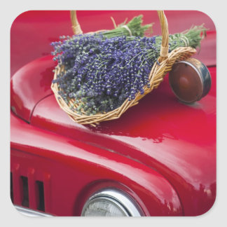 Lavender bunches rest on old farm pickup truck square sticker