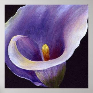 Lavender Calla Lily Poster